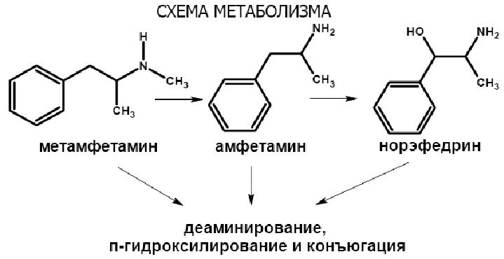 Amphetamine machen geil